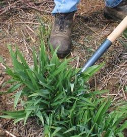 Dirt-and-shovel