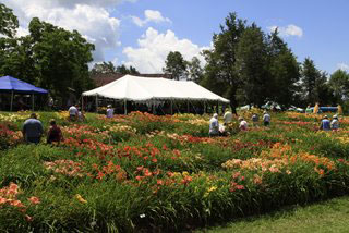 Oakes-Daylilies-Festival